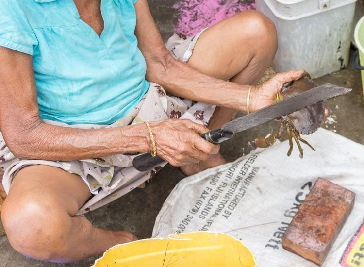 ethically killing a mud crab