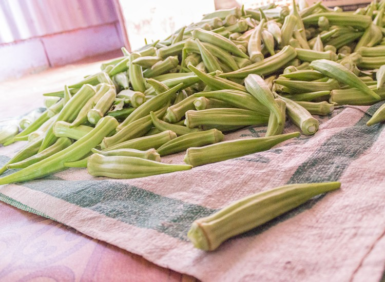fresh bhindi okra in bulk